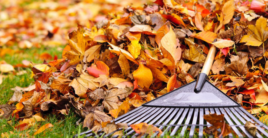 fall clean-up winnipeg